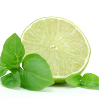 Candle Fragrance Oil - Cool Citrus & Basil