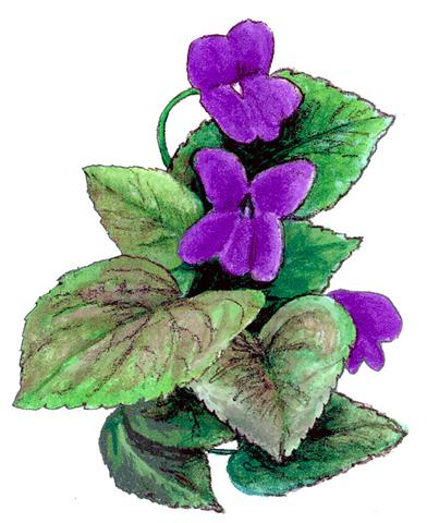 Candle Fragrance Oil - Violets